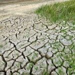Dry earth and grass